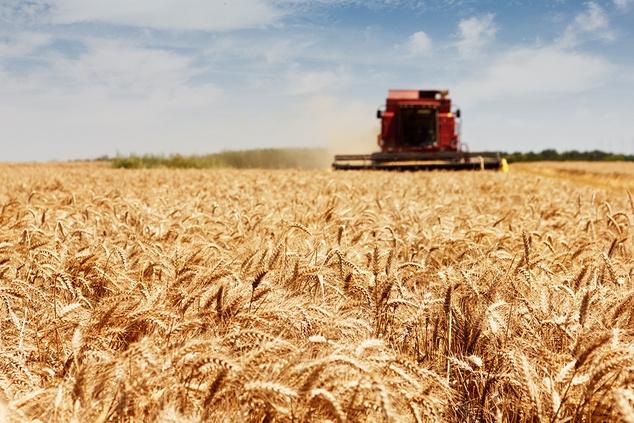 Про статути сільськогосподарських кооперативів